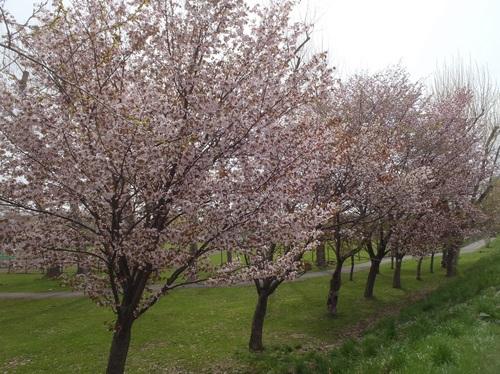 農試公園1.jpg