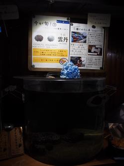 P7161591.JPGのサムネール画像