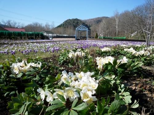 2014050511春の庭.jpgのサムネール画像