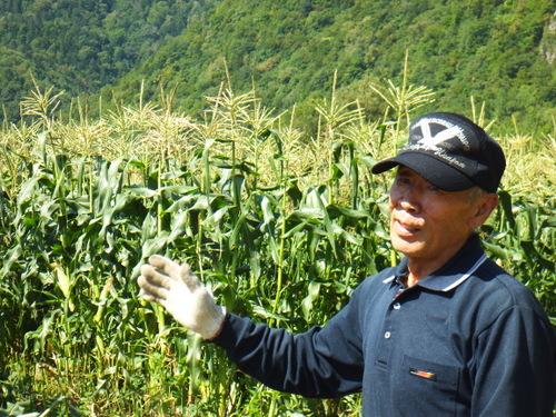 トウキビ畑2.JPG