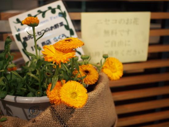 12お花.JPG