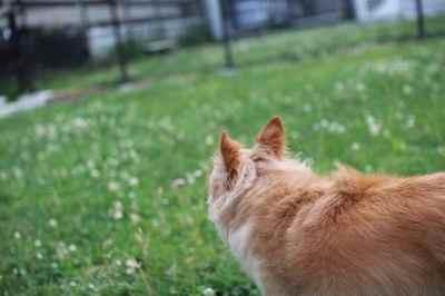 芝生見る.jpg
